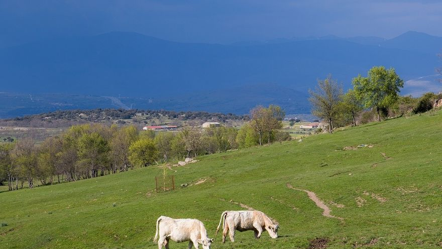 Medio Rural abonará desde mañana 6,7 millones a 2.870 ganaderos de vacuno de carne