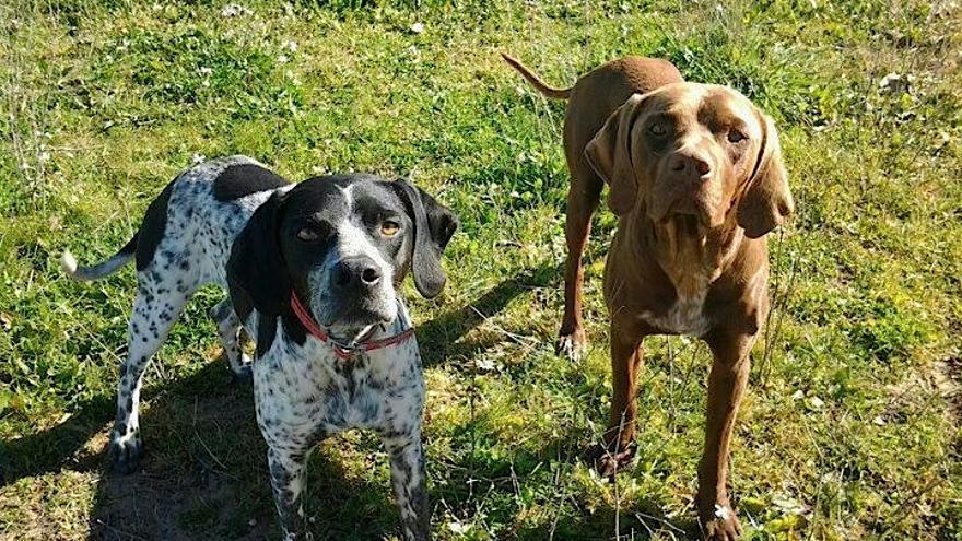 Dos de los perros que han podido localizar los activistas