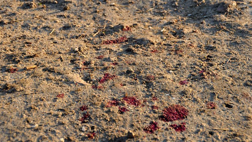 Los heridos en el salto van dejando un reguero de sangre. / J. Blasco de Avellaneda