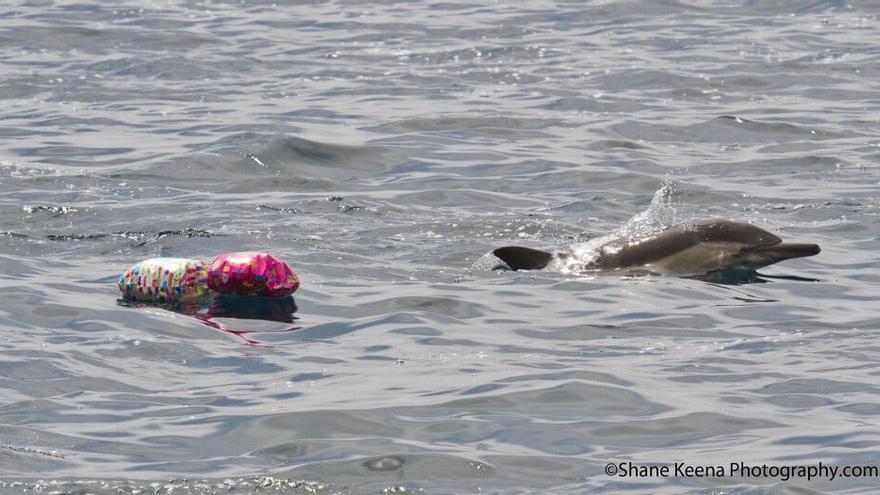 Restos de globos en el hábitat de un delfín