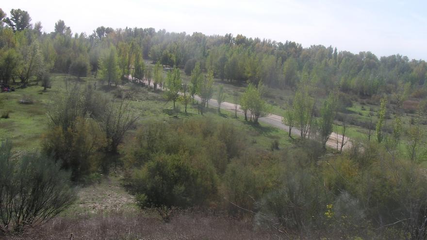 Paraje de la finca Soto de las Huelgas, donde se pretende construir el campo de golf. / Ecologistas en Acción.
