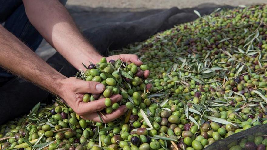 Los exportadores rechazan la acusación de EEUU de competencia desleal en aceitunas