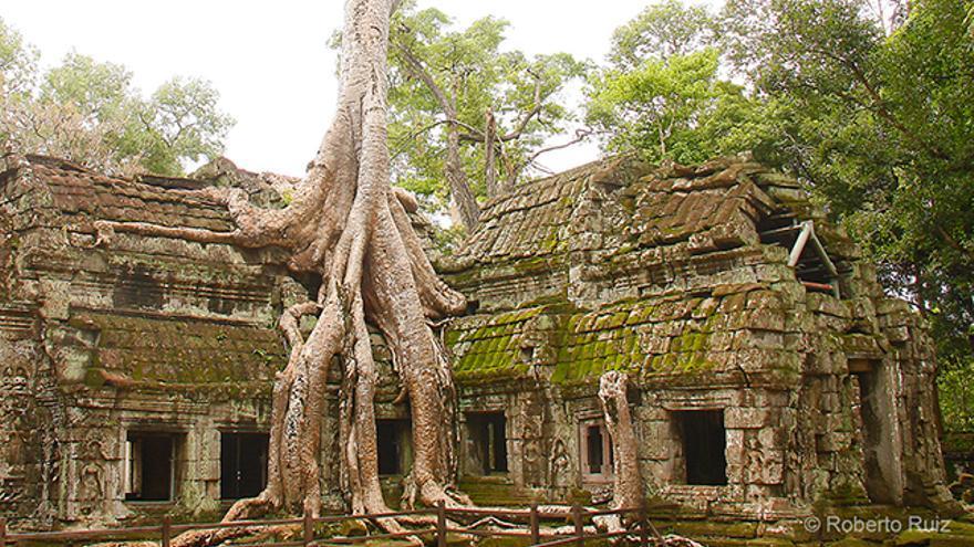 El templo de Ta Prohm en Angkor, Camboya