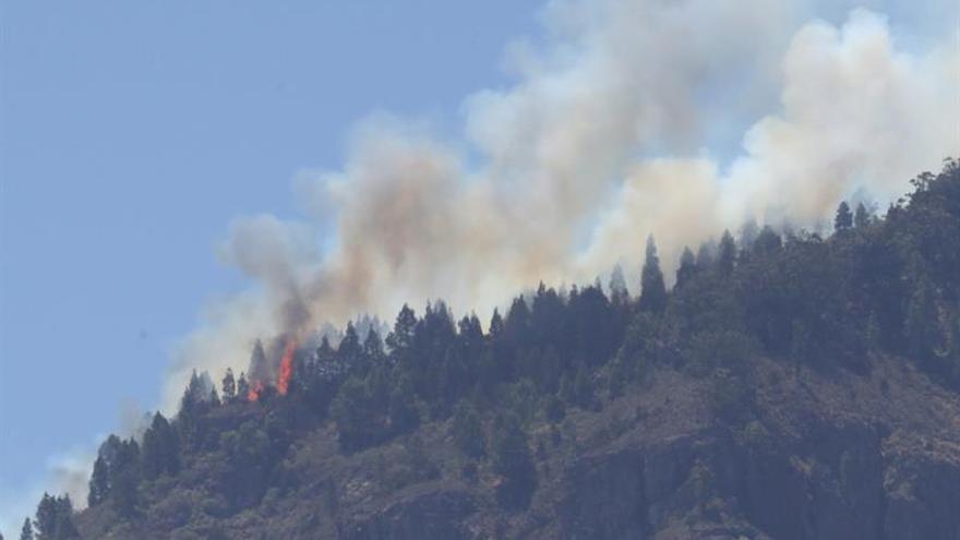 Vista del incendio de Gran Canaria desde uno de sus focos activos en el Pinar de Tamadaba. EFE/ Elvira Urquijo A.