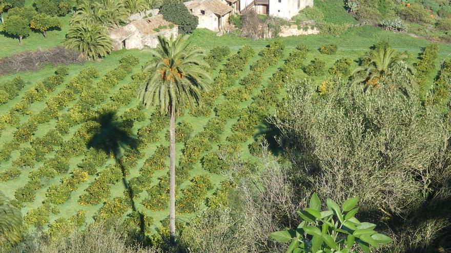 La superficie cultivable de la isla queda finalmente fijada en 30.019 hectáreas.