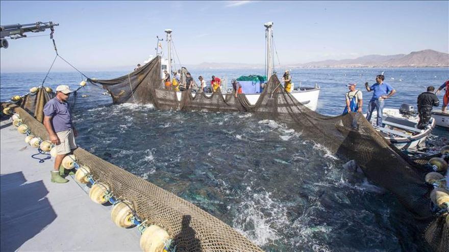 Pesca con almadraba en el Mediterráneo.