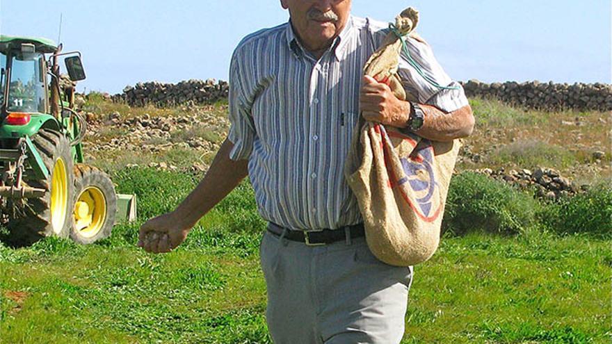 Antonio González plantando lenteja majorera una vez que la tierra está suelta y sazonada.