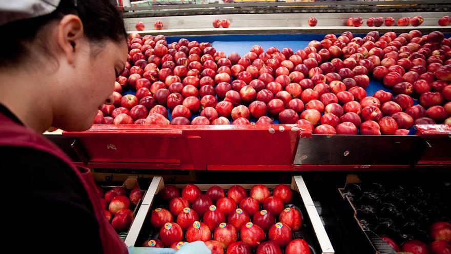 184 trabajadores tiene actualmente en las peonadas para el tratamiento de la fruta de hueso en esta cooperativa