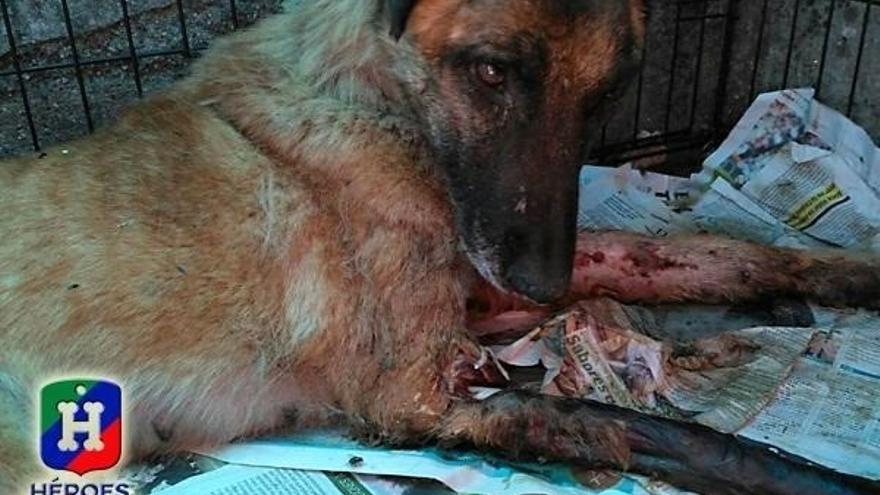 Vespa, la perra maltratada que sirvió en Protección Civil, encuentra hogar en Navarra