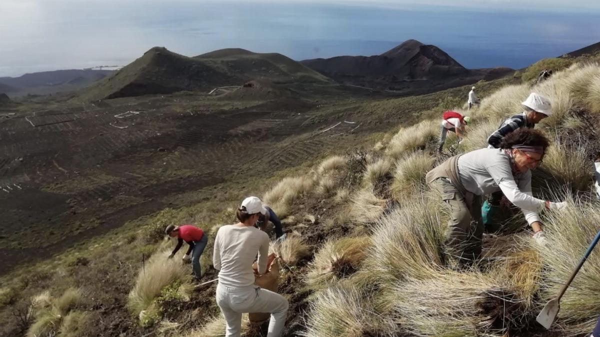 Una acción del colectivo en los volcanes de Teneguía.