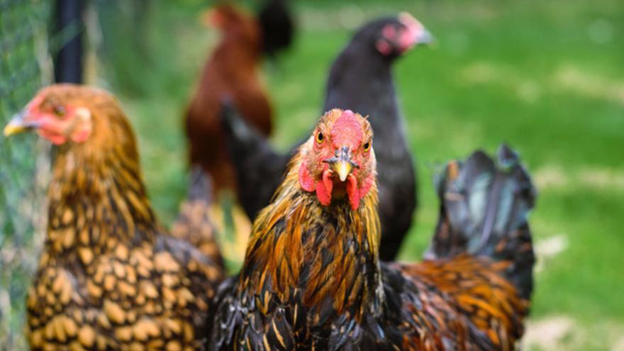 Según el Eurobarometer on Animal Welfare 2016, un 94% de los consumidores europeos creen que el bienestar de los animales en la granja es muy importante.