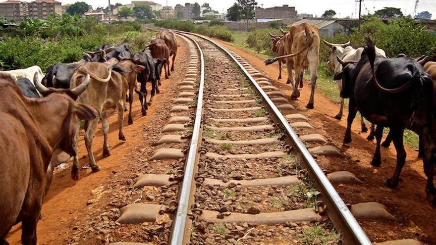 Animales en el antiguo trazado del Tren Lunático. Colin Crowley