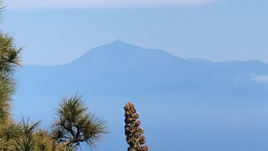 El Teide y un tajinaste rosado (Echium wildpretii ssp trichosiphon)  en una parcela situada  entre el barranco Hondo y barranco Vizcaíno.