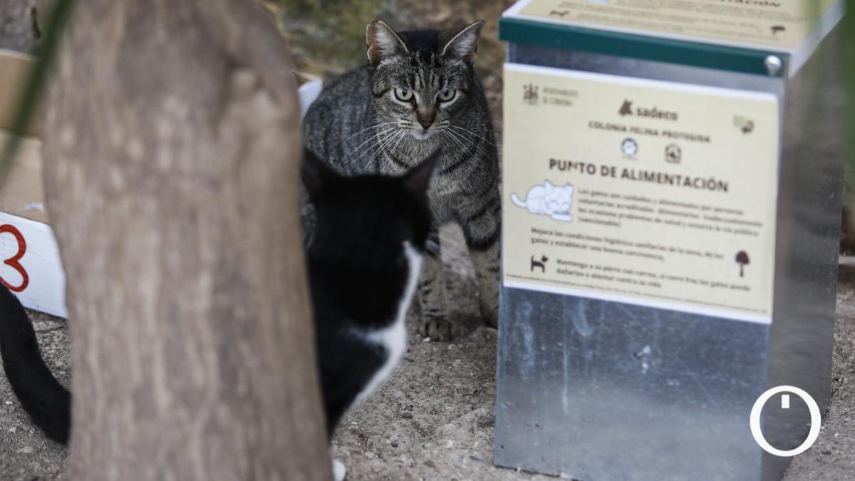 Punto de alimentación de una colonia felina.