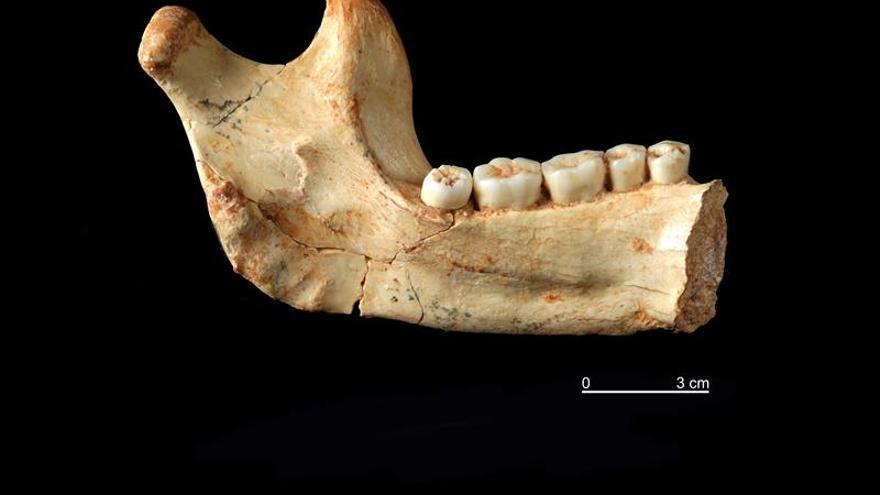 El canibalismo del Homo Antecessor no se debía a la escasez de alimentos