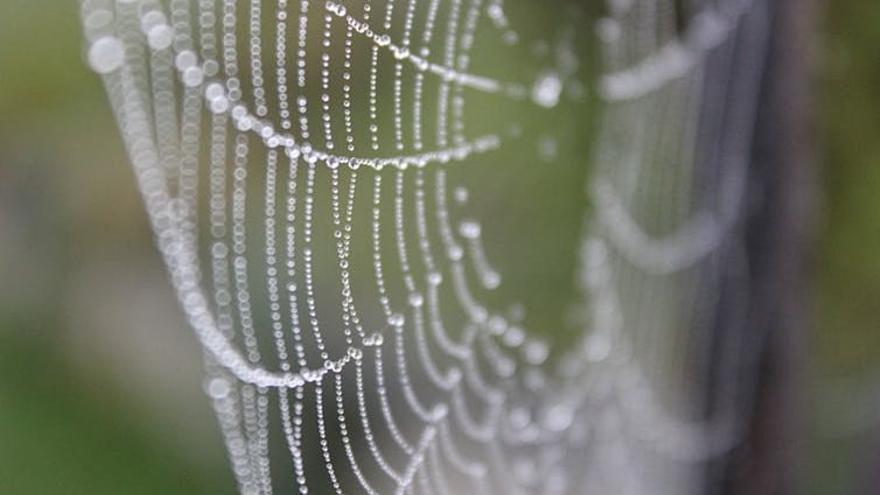 'Gossamer', el material del que están hechas las telas de araña.