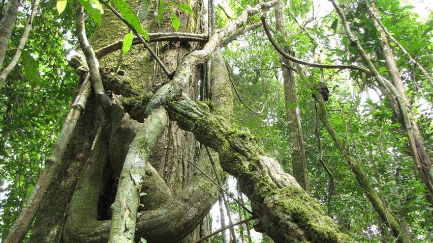 """Los árboles de la Amazonía """"inhalan"""" menos carbono en las sequías, según los expertos"""