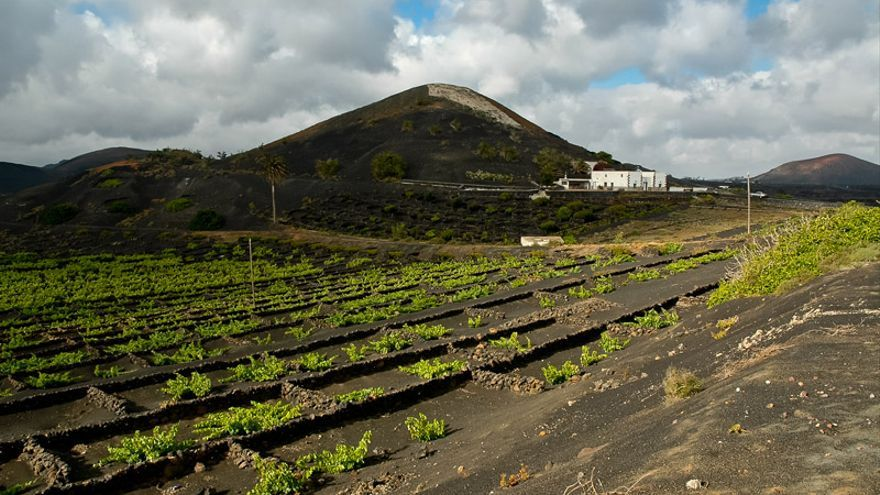 Imagen del paisaje Protegido de La Geria.