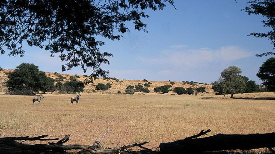 Imagen de archivo de la reserva de la Reserva de Caza del Kalahari Central./ Chris Merwe