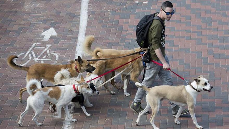 El Congreso pacta la prohibición de cortar el rabo a los perros por estética