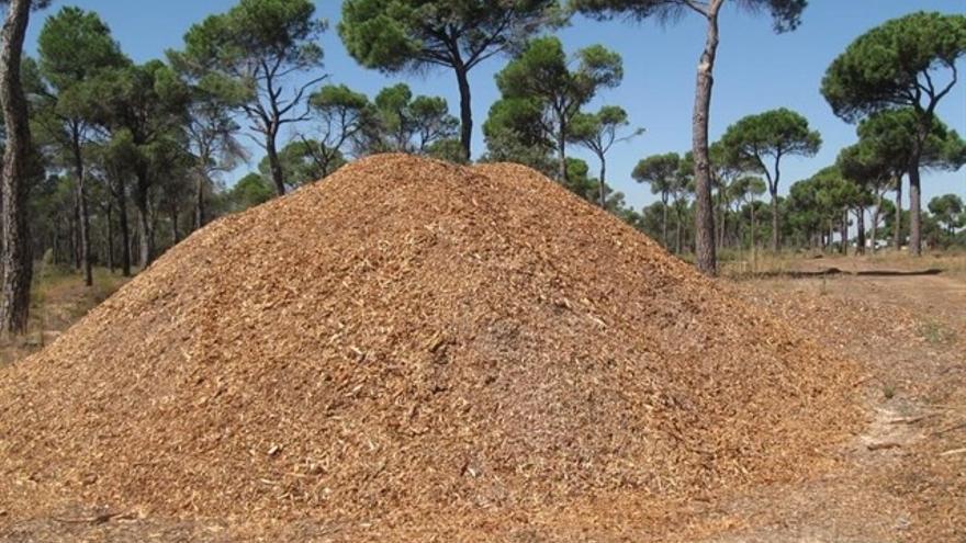 Biomasa forestal / Europa Press