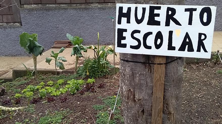 Imagen de archivo de un huerto escolar en Tenerife