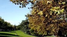 La calidad y el uso de los espacios verdes determinan su efecto sobre salud