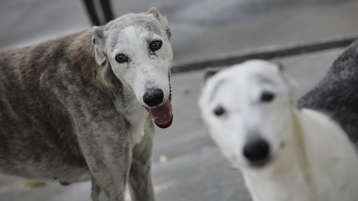 Dos perros en una imagen de archivo.