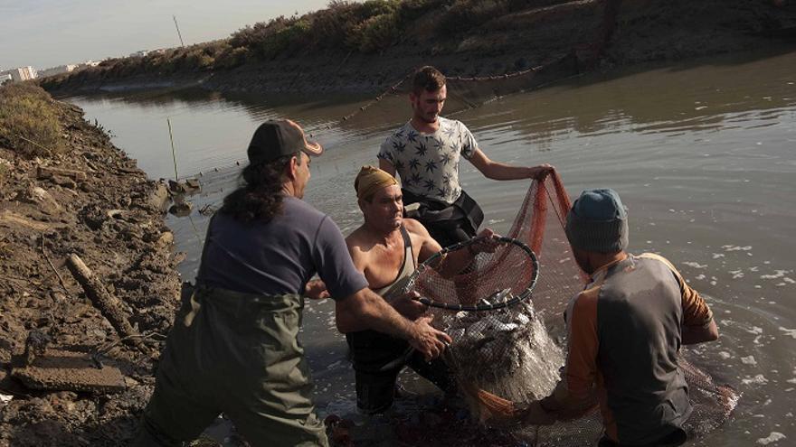 'La sal pesquera de la Bahía de Cádiz', foto premiada este año