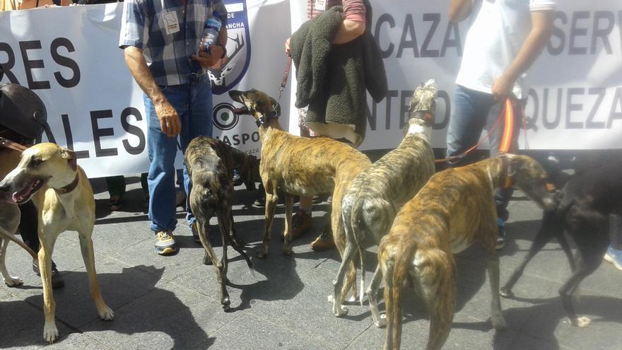 Galgos en la manifestación de cazadores de Castilla-La Mancha