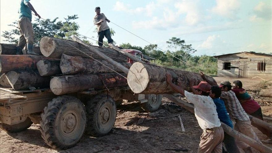 La Reserva de Biosfera de Bosawas, en Nicaragua, sitiada por la tala y los invasores