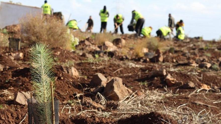 Voluntarios trabajando en labores medioambientales.
