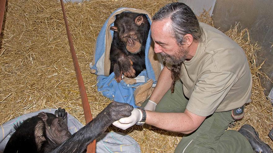 Guillermo Bustelo, director del centro de recuperación de primates Rainfer, atiende a unos chimpancés enfermos.