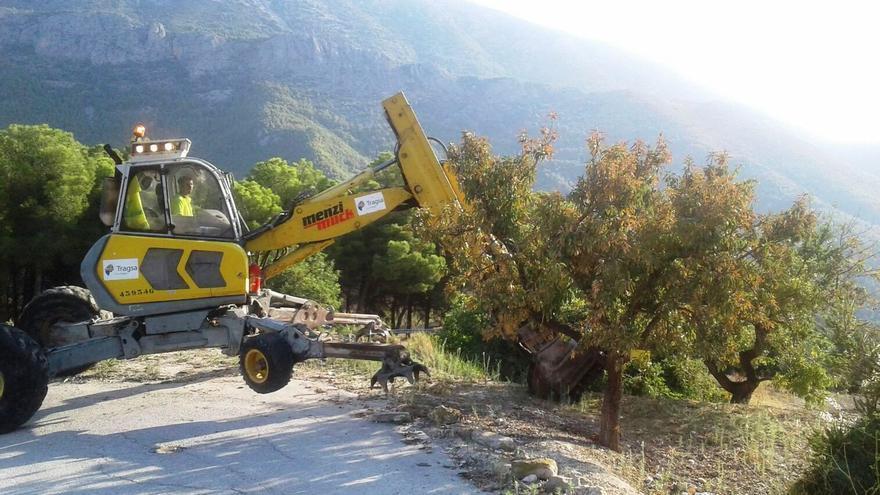 Una máquina arranca un almendro afectado por Xylella en la provincia de Alicante