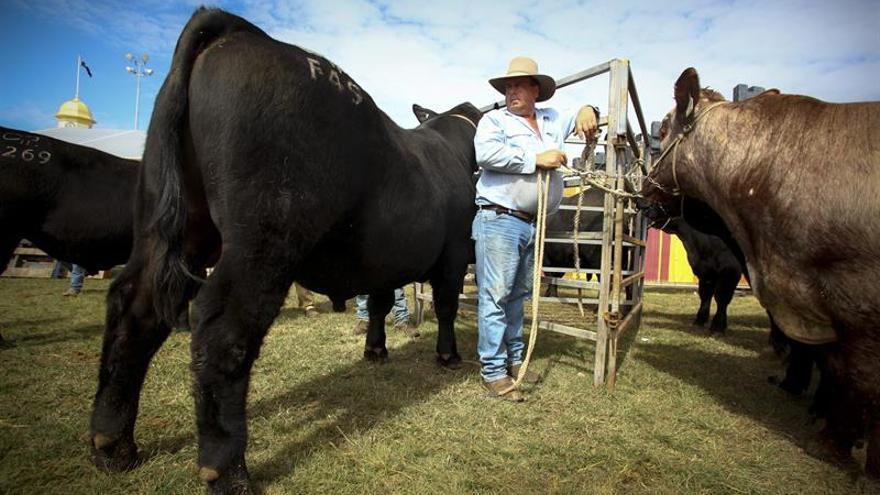 El gobierno de Australia aprueba la venta de la mayor ganadería del país