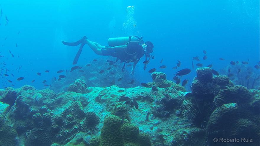 Imagen de archivo. El turismo es una de las causas más citadas de la destrucción de los arrecifes