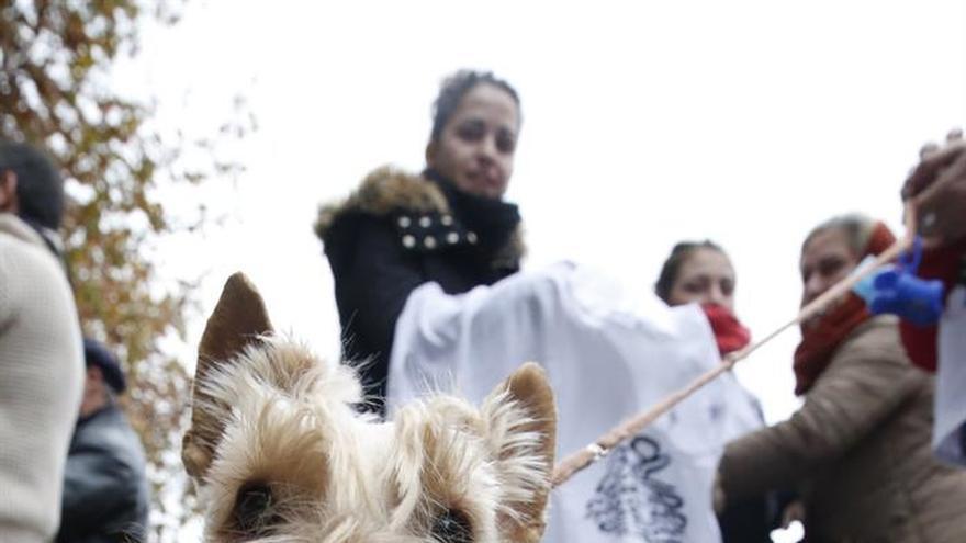 C's propone una ley sobre la tenencia de mascotas y endurecer el maltrato