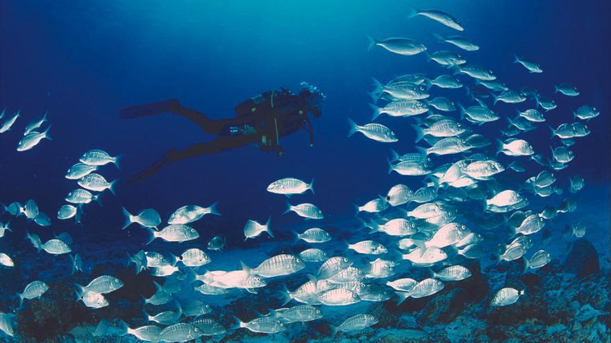 Riqueza de fauna marina en aguas del norte de Lobos