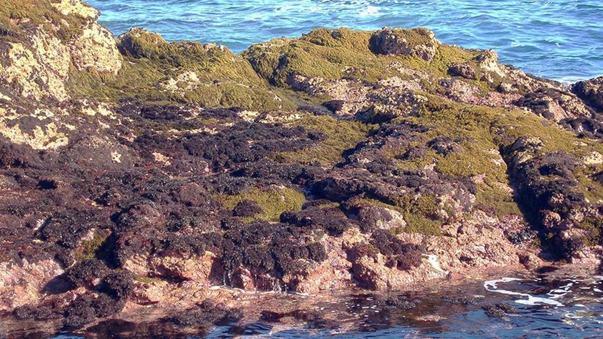 Población de algas en Gáldar, Gran Canaria