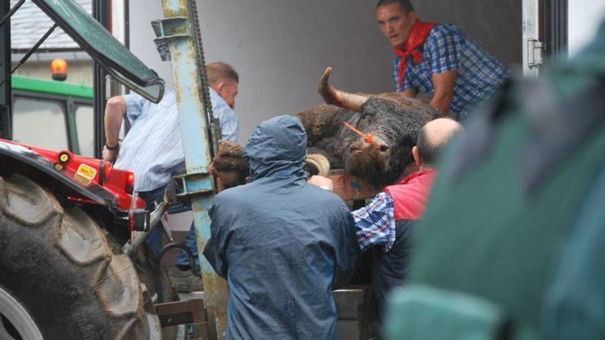 Toro sacrificado en una corrida en Triacastela (Lugo)