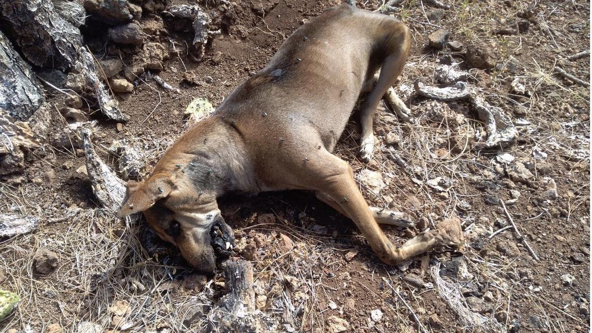 Uno de los perros que apareció envenenado. GUARDIA CIVIL