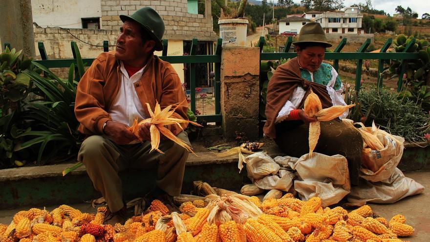 Antonio y su esposa deshojan el maiz en la comunidad andina de Pijal, Ecuador | FOTO: Jaime Giménez