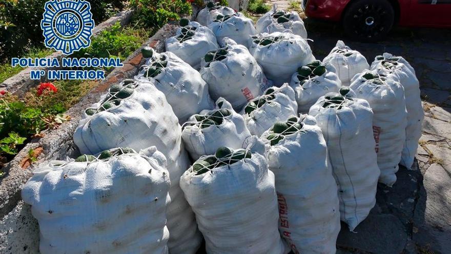 Incautados 1.400 kilos de aguacates robados en Tenerife. (PN).