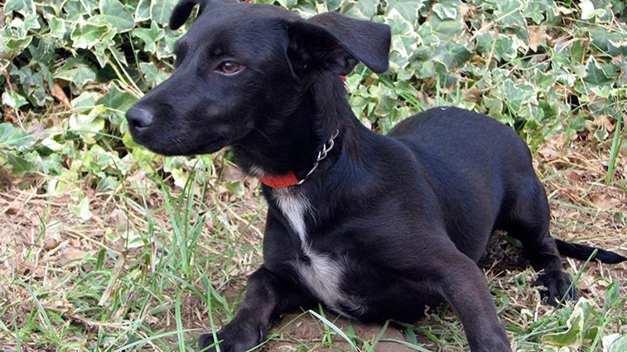 El número de eutanasias de perros en el Centro Zoosanitario cae un 53% desde 2011 pero aumenta un 3% en 2018