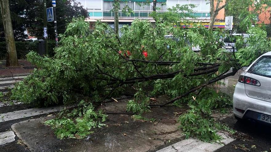 La lluvia sobre Madrid ha dejado balsas de agua y árboles y techos rotos