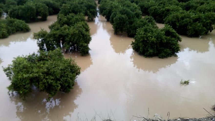 Imagen de un campo de cítricos inundados tras el temporal