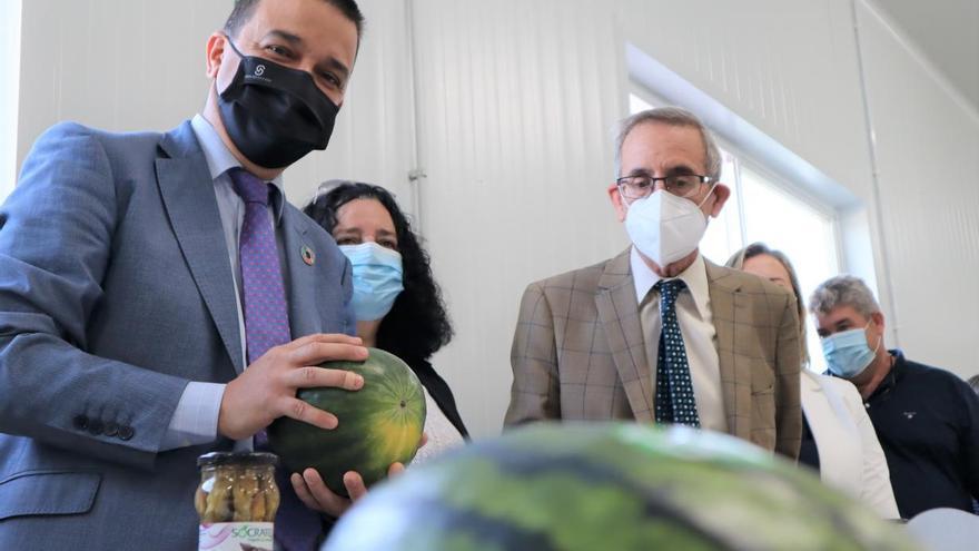 La orden para solicitar ayudas para paliar los daños en el olivar afectado por Filomena se publicará el próximo lunes