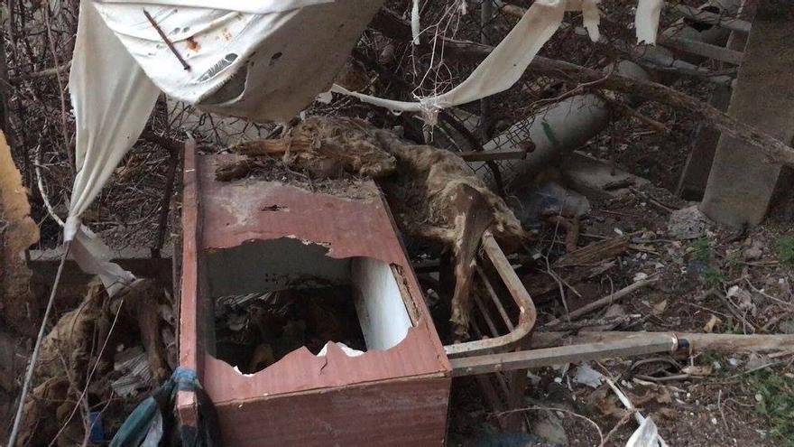 Cadáveres de perros hallados en la finca de Arona