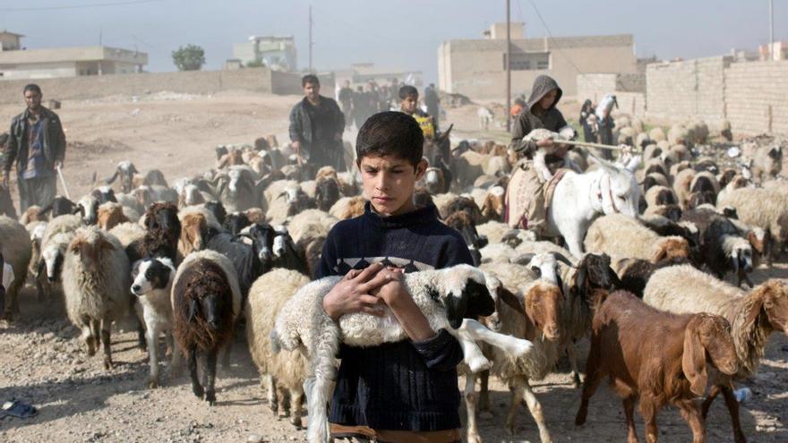 Sea cual sea el resultado de la batalla en curso por Mosul, el brutal dominio del Estado Islámico sobre la franja que lo rodea en el norte de Irak de los dos últimos años ha dejado un reguero de destrucción y trauma © Marko Drobnjakovic