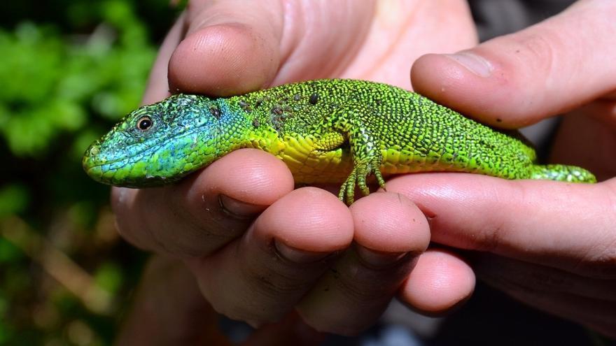 El Parketxe de Anduetza organiza un itinerario este domingo para conocer los reptiles y anfibios de Aizkorri